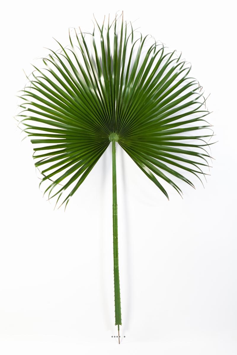 feuille palmier washingtonia artificielle h 215 cm d 120 cm geante du site. Black Bedroom Furniture Sets. Home Design Ideas