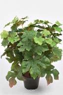 Petits arbres h 100 cm for Arbre factice