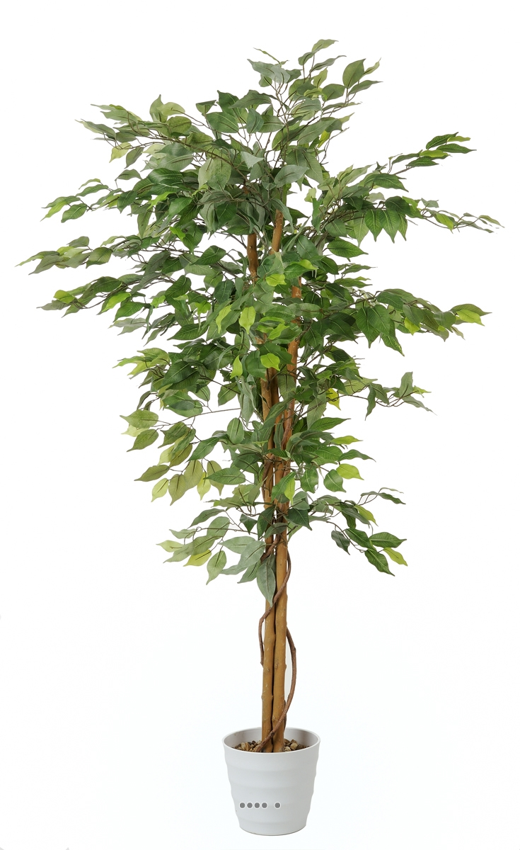 Ficus artificiel abai avec de superbes feuilles qualite for Ficus artificiel