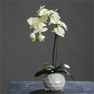 Orchidee artificielle Creme Vert1 hampe en pot Ceramique Blanc H 46 cm