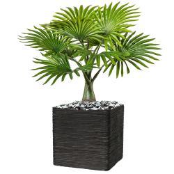 petits arbres h 100 cm boutique de fleurs plantes. Black Bedroom Furniture Sets. Home Design Ideas