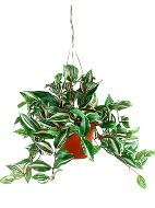 Tradescantia artificiel Panaché H 40 cm en suspension