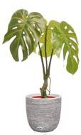 Monstera deliciosa artificielle en pot H 60 cm, D 42 cm