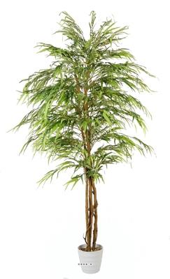Arbres boutique de fleurs plantes arbres et fruits for Palmier factice