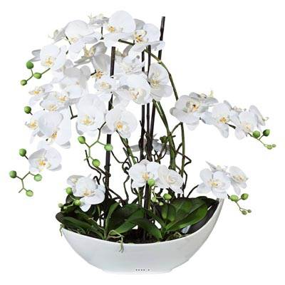 Orchidee artificielle 9 hampes en coupe Ceramique Blanc H 70 cm magistrale
