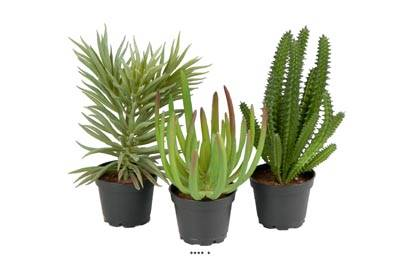 Succulentes plantes artificielles lot de X3 Cactus factices en pot H 13-17 cm