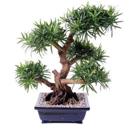 Bonsaï Podocarpus Artificiel H 70 cm D 60 cm en pot