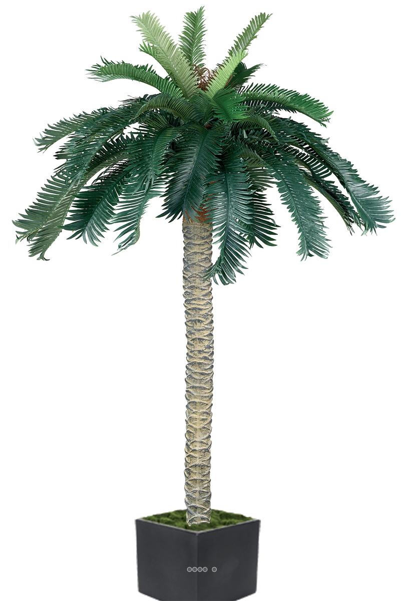 palmier cycas en pot 130cm du site. Black Bedroom Furniture Sets. Home Design Ideas