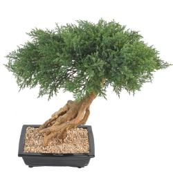 Bonsaï Genévrier Artificiel H 60 cm D 60 cm en pot