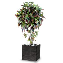 Croton Artificiel Troncs Bois en pot H 180 cm Vert-rouge