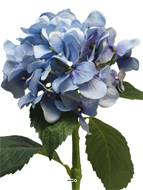 Hortensia artificiel en branche, H 48 cm Bleu royal - BEST - couleur: Bleu royal