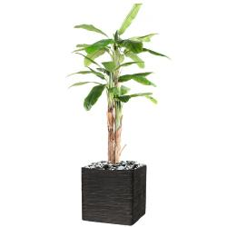 Bananier artificiel en pot 3 Troncs naturel H 240 cm Vert