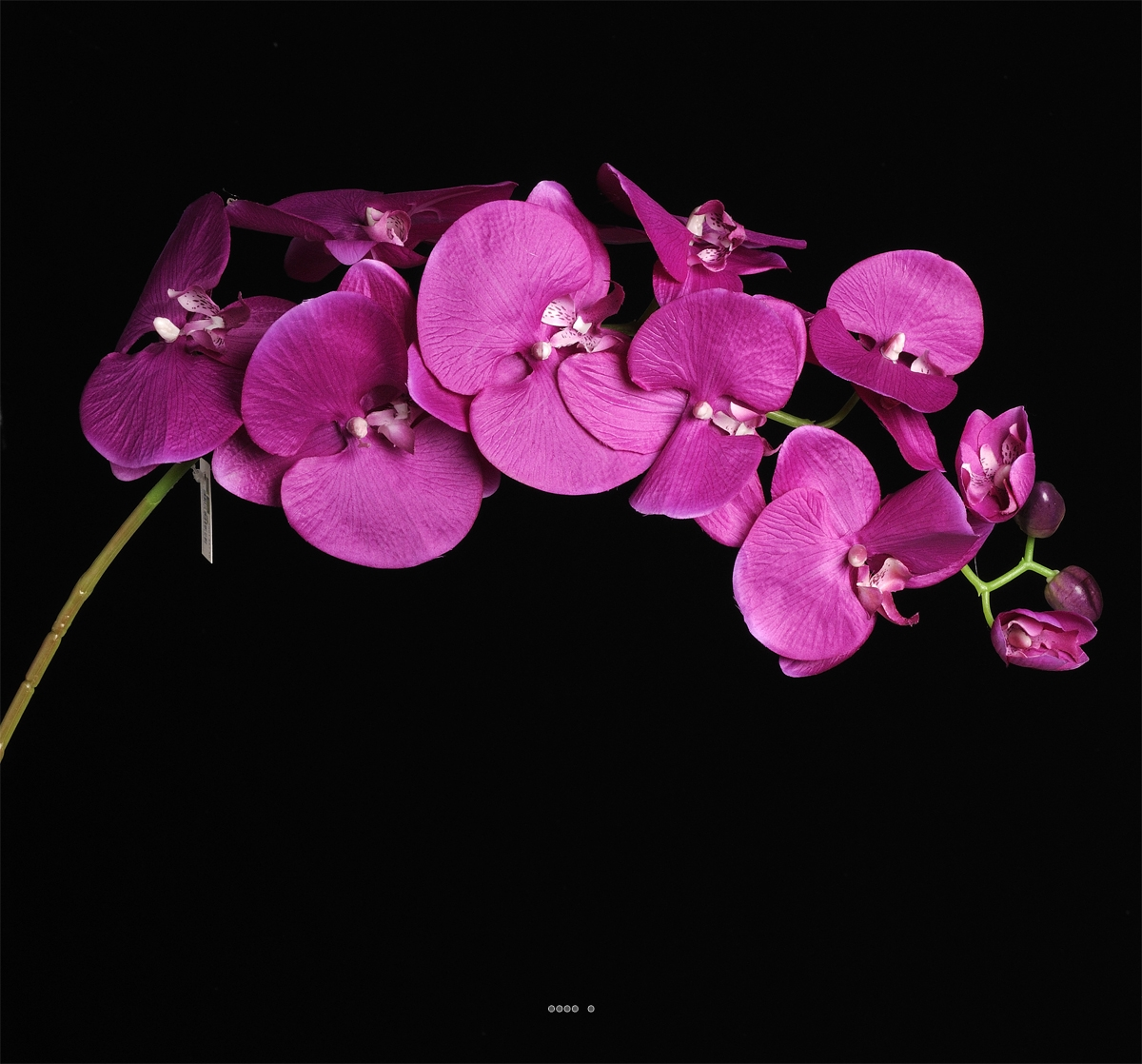 orchidee lisa artificielle h 98 cm 8 fleurons 4 boutons. Black Bedroom Furniture Sets. Home Design Ideas