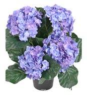 Hortensia en pot artificiel leste H 40 cm 5 superbes tetes Bleu royal