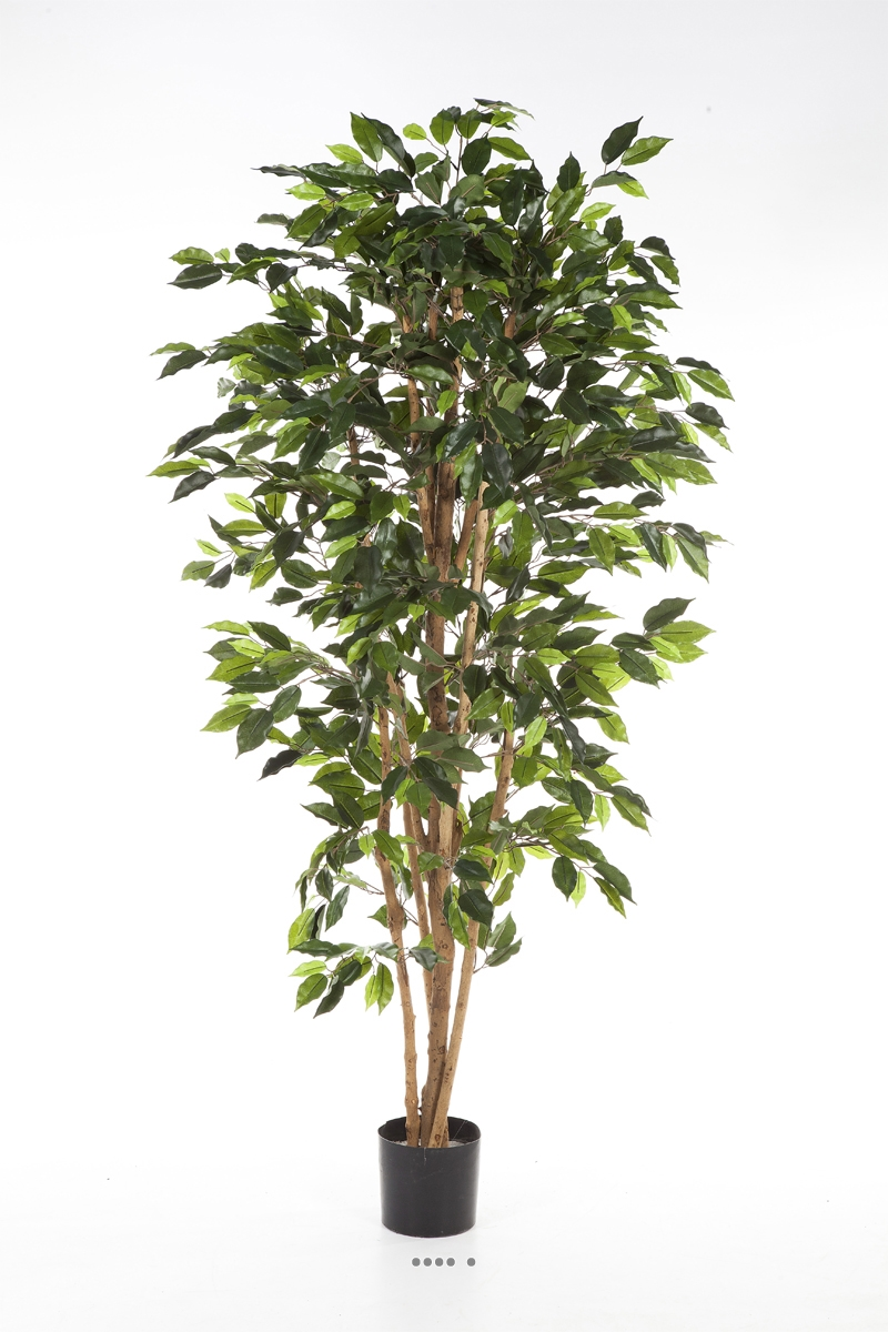 ficus nitida artificiel en pot tronc naturel du site. Black Bedroom Furniture Sets. Home Design Ideas