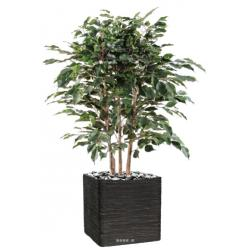 Ficus Exotica Artificiel H 80 cm L 60 cm en buisson tronc naturel en pot