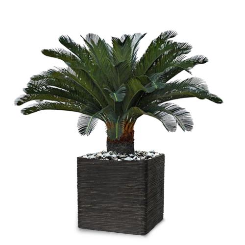 Palmier Cycas artificiel en pot H 100 cm superbe