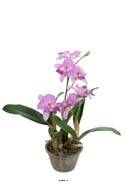 Orchidée cattleya artificielle en pot, H 60 cm