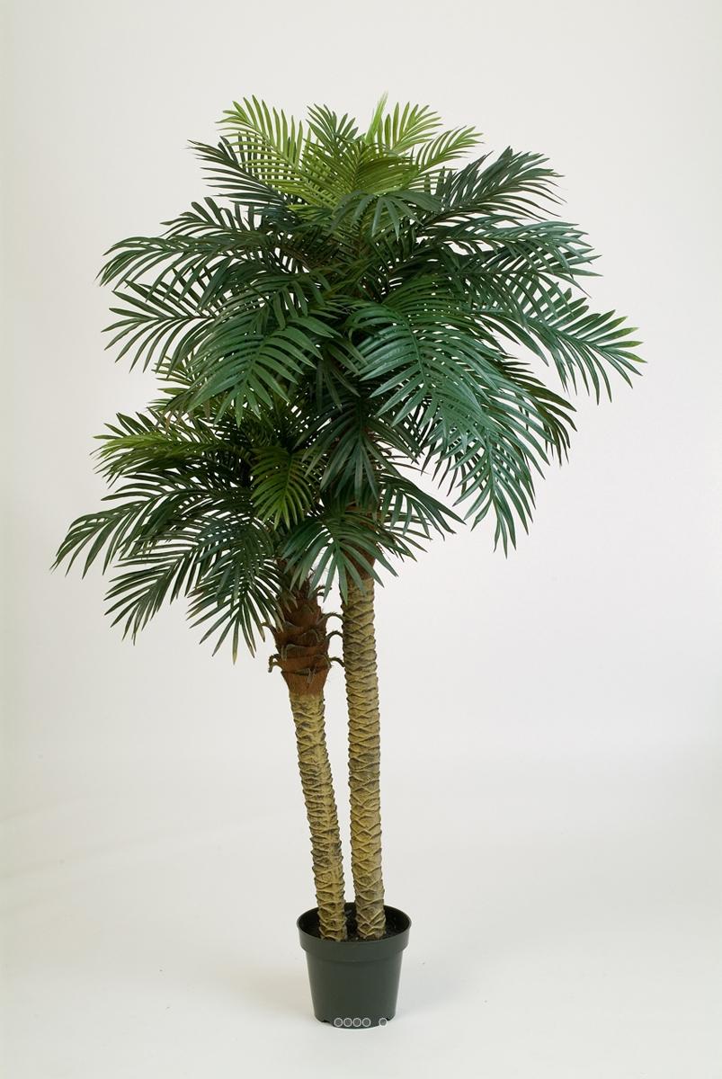 palmier phoenix h 210 cm 2 troncs 55 feuilles artificiel du site. Black Bedroom Furniture Sets. Home Design Ideas