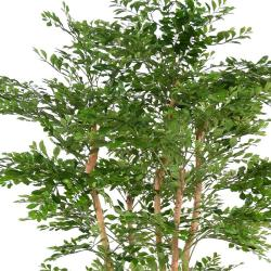 Acacia Artificiel 5 Troncs Naturels  H 180 cm D 100 cm en pot