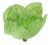 Salade laitue Romaine legume artificiel H 20 cm et D 16 cm Latex