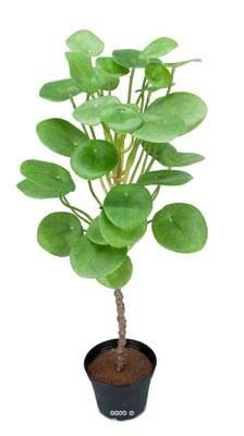 plante verte oreilles d elephant artificielle en pot h 50 cm du site. Black Bedroom Furniture Sets. Home Design Ideas