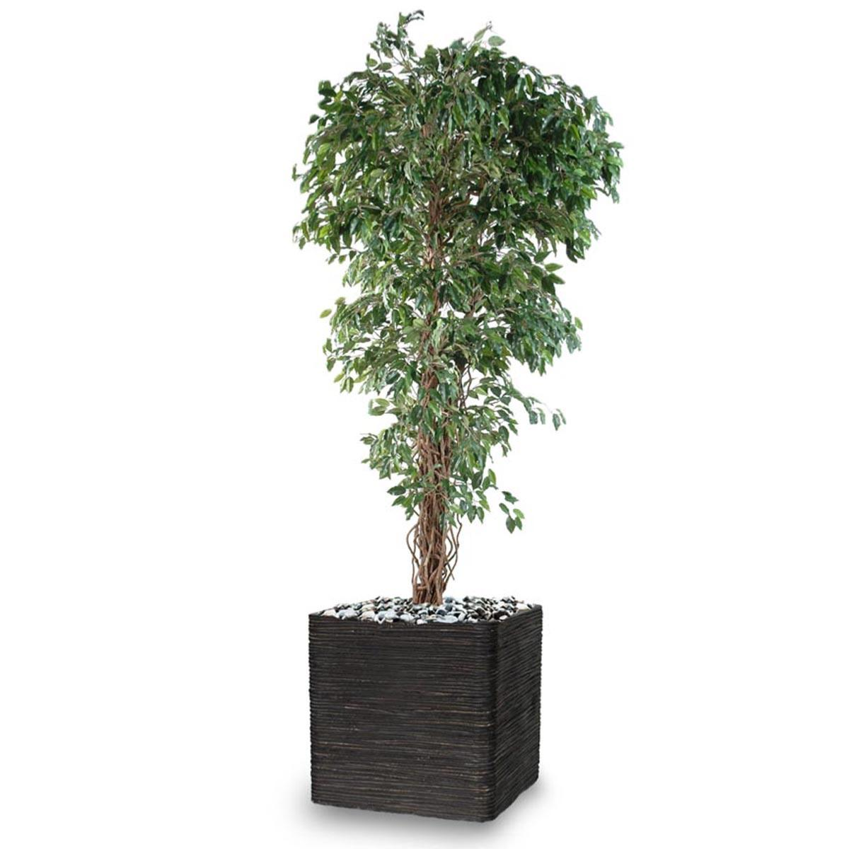 Petites Plantes Fleuries En Pot ficus benjamina artificiel petite feuille tronc lianes en pot tronc naturel  h 180 cm vert