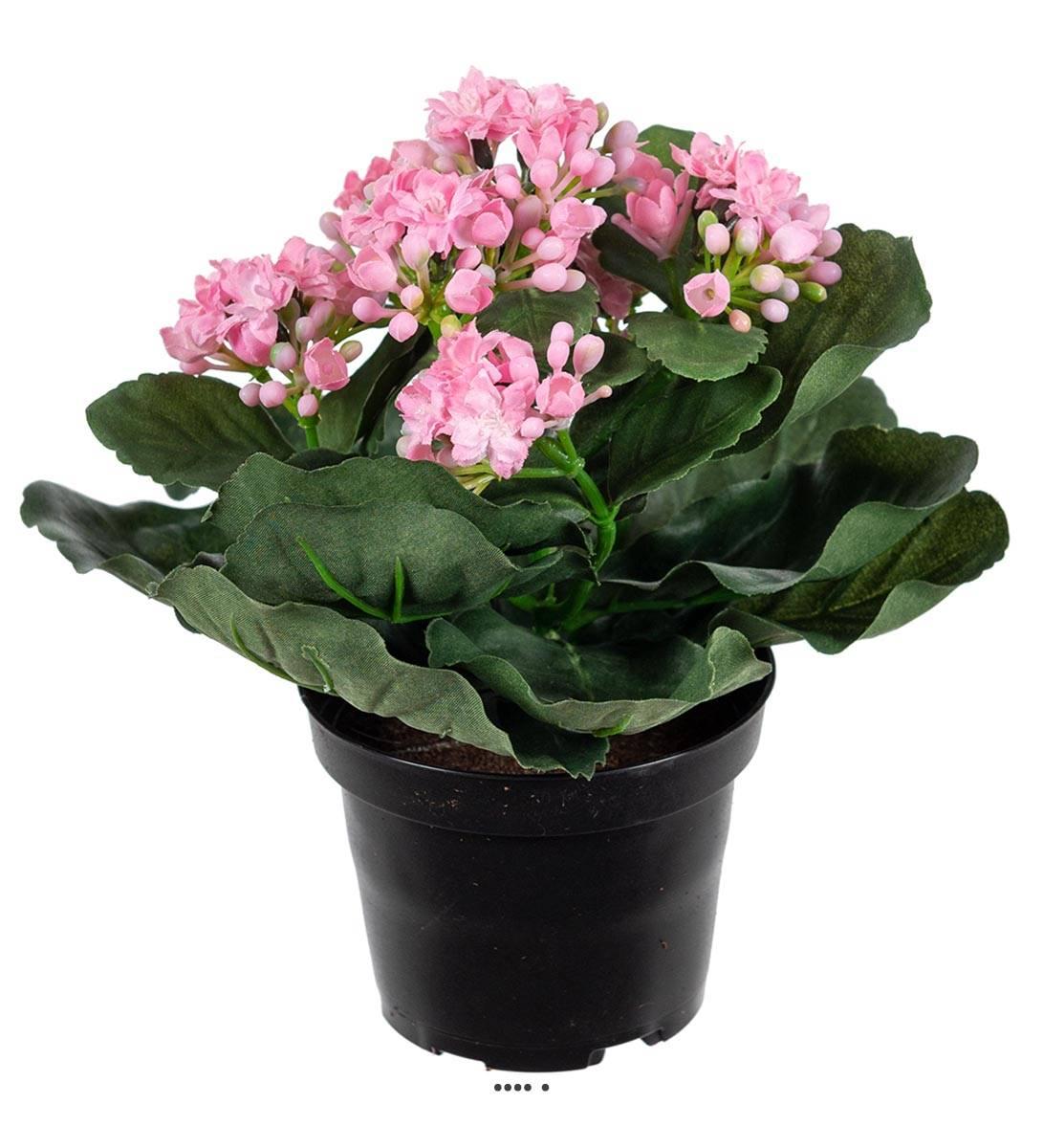 Petites Plantes Fleuries En Pot kalanchoe artificiel en pot h 20 cm adorable et tres dense rose