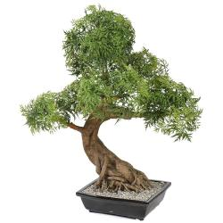 Bonsaï Aralia Artificiel H 95 cm D 60 cm en pot